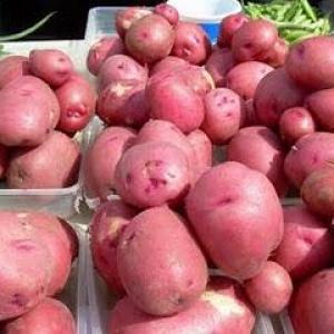 Potato festival red Colfiorito