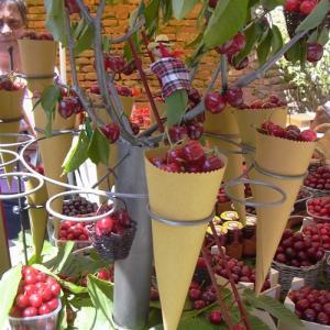 Sagra delle ciliegie a Lari