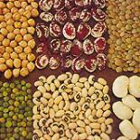 Gastronomy Abruzzo