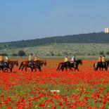 équitation Italie