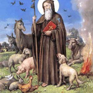 Festa di S. Antonio Abate Varese