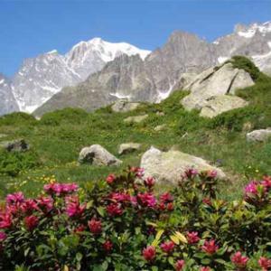 Giardino Alpino Saussurea di Courmayeur