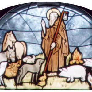 La festa di Sant'Antonio Arcidosso Grosseto