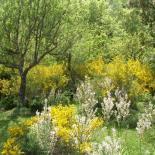 Park Sicily