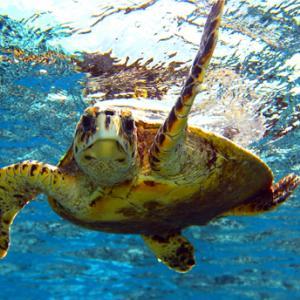 Riserva Naturale di Lampedusa Agrigento