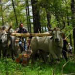 Fairs and folkloristic festivals Basilicata