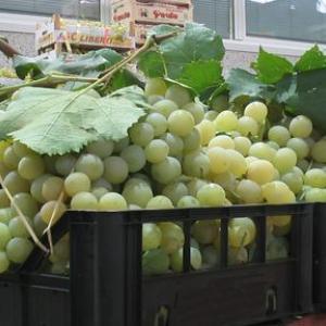 Sagra dell'uva Marino Roma
