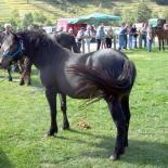 Horse riding Liguria